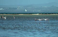 """شاهد.. جزيرة """"ماركا"""" بعسير طبيعة ساحرة ووجهة جديدة لمحبي الغوص والسباحة"""