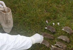 بالفيديو.. استشاري أمراض معدية يعلق على انتشار مرض الطاعون الدبلي بالصين