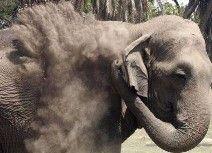 الفيل (أسامة) يقتل بالرصاص في شرق الهند