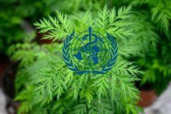 """""""الصحة العالمية"""" تقر إجراء اختبارات على أدوية عشبية إفريقية لفيروس كورونا"""