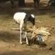 بالفيديو : ثعبان يفاجئ شاب أثناء بحثه عن الفقع