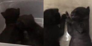 تم القبض عليه.. شخص ينشر فيديو له وهو يقتُل قطتين صغيرتين باستخدام غاز