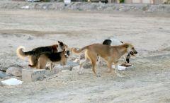 فيديو يوثق لحظة هجوم كلاب ضالة على طفل في تبوك .. ومصادر تكشف التفاصيل